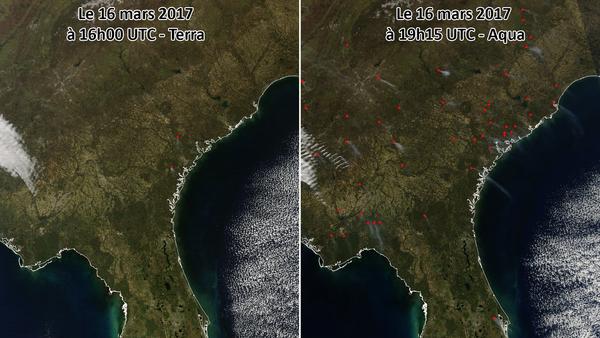 Multiplication de feux de forêts sur le sud-est des États-Unis