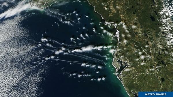 Invasion de méduses nuageuses dans le golfe du Mexique